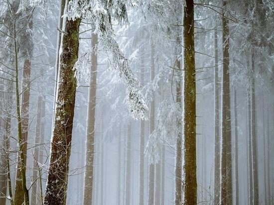 В опочецком лесу ночью потерялся 7-летний мальчик