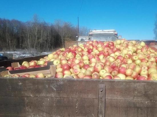 В Себеже уничтожили украинскую пекинскую капусту, яблоки и груши