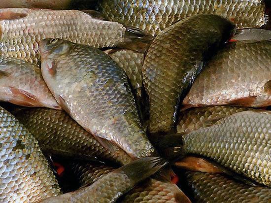 В Калмыкии задержан рыбак с запрещенными сетями