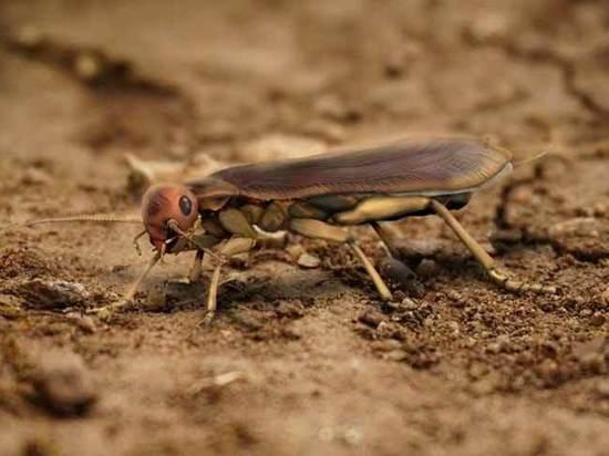Российские ученые воссоздали облик первого таракана на земле