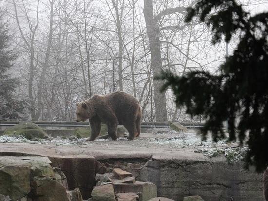 Калининградский зоопарк будет работать на два часа дольше