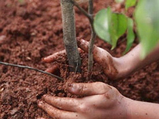В Воронеже за год высадят 4 тысячи деревьев