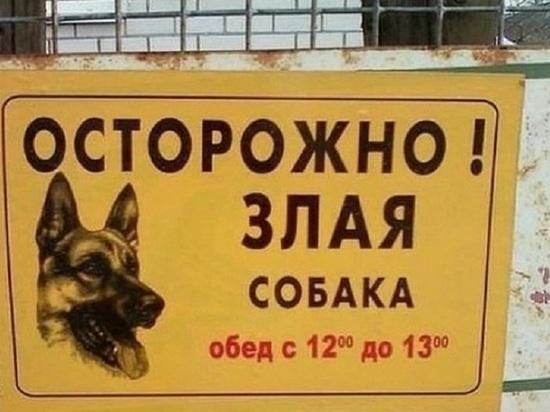 Районная прокуратура в Калмыкии указала муниципалитету на места собачьего выгула