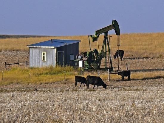 Эксперты оценили пятилетний прогноз США обогнать Россию по экспорту нефти