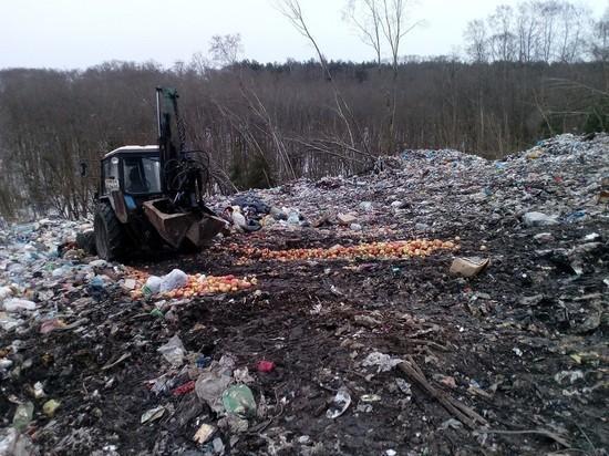 В Псковской области уничтожили польские яблоки и голландские груши