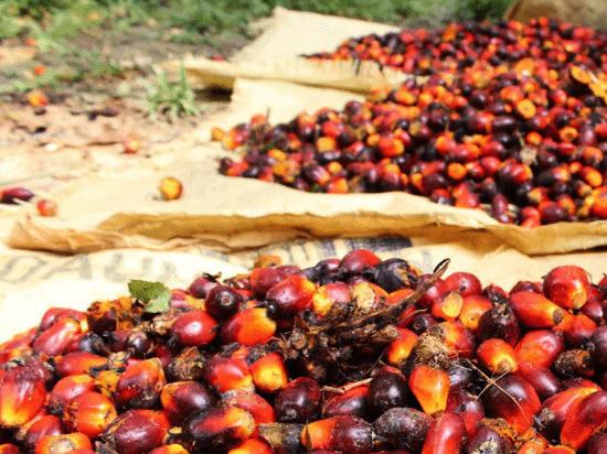 Тульская область отличилась в объемах закупок пальмового масла