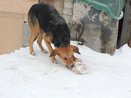 В Оренбурге продолжается массовое истребление собак