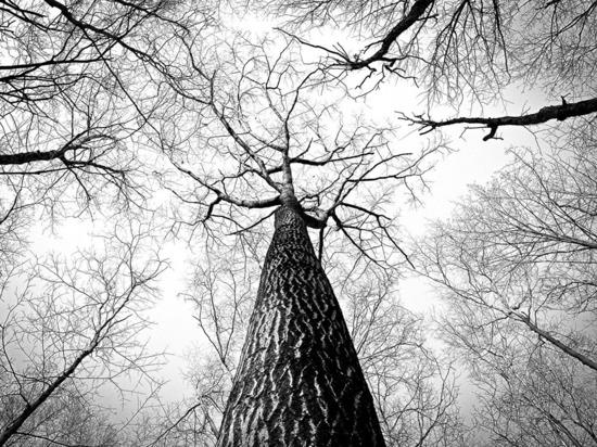 Школьница заблудилась в лесу под Воронежем и умерла от обморожения