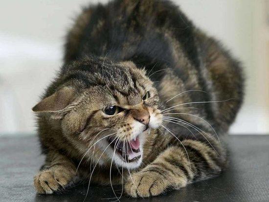 В калмыцком райцентре Кетченеры кошка заболела бешенством