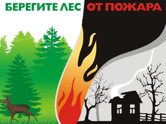 18 млн. рублей выделено в Ивановской области на закупку техники для предотвращения лесных пожаров