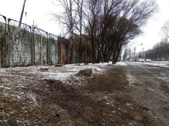 На улице Труда в Пскове пилят деревья