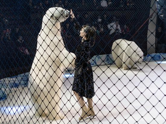 В Воронеж привезли единственный в мире аттракцион с белыми медведями