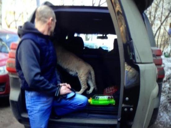 Полицейские сделали селфи со львицей, найденной в московской квартире
