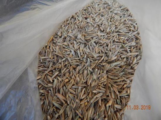 В Псковскую область не пустили семена газонных трав