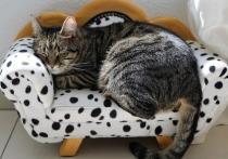 Метод, позволяющий отличить истинное желание поспать в течение дня от обычной лени или просто усталости, разработали ученые Сеченовского университета в Москве