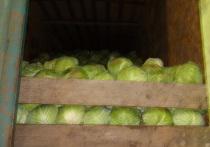 В Оренбургскую область не пустили лук, капусту, редис и многое другое