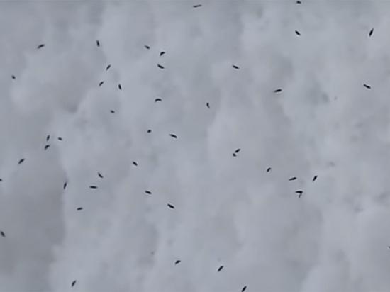 Жителей Самарской области напугал «снегопад с насекомыми»: видеозапись прокомментировал биолог - наука