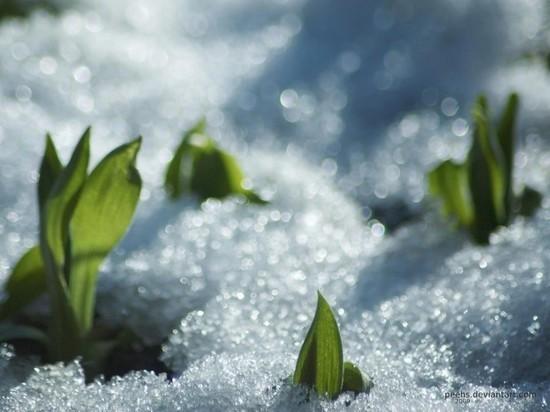 В пятницу, 15 марта в Ярославль придет потепление