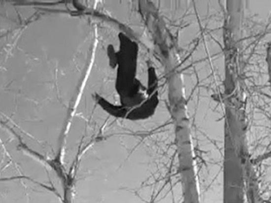 Житель Николаевска-на-Амуре повис на дереве, чтобы привлечь внимание властей