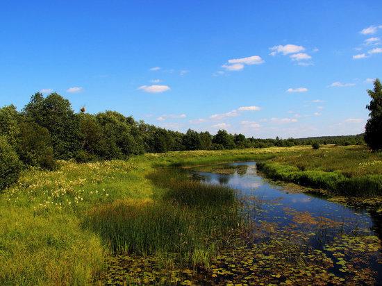 Самая грязная река Ивановской области - Шача