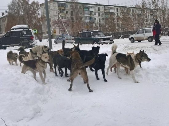 Тверские кусаки: как вести себя, если нападает собака