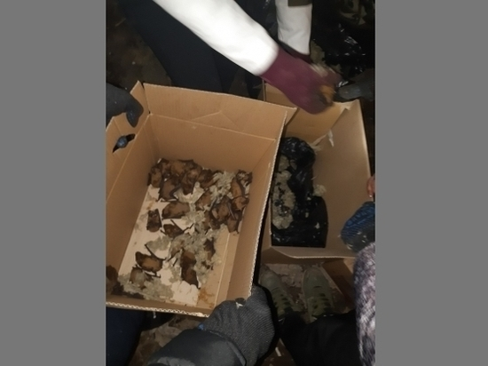 На мусорке в Волгограде нашли 300 летучих мышей