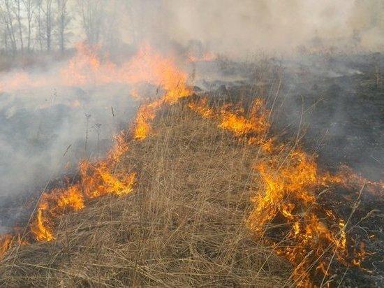 Первый пал травы зафиксирован в Псковской области