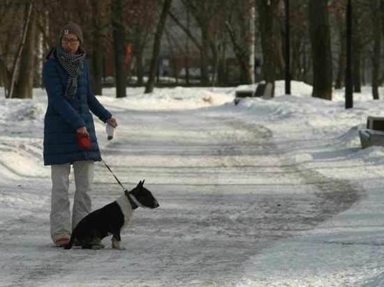 Москвичей приучают убирать за собаками: что вреднее для экологии