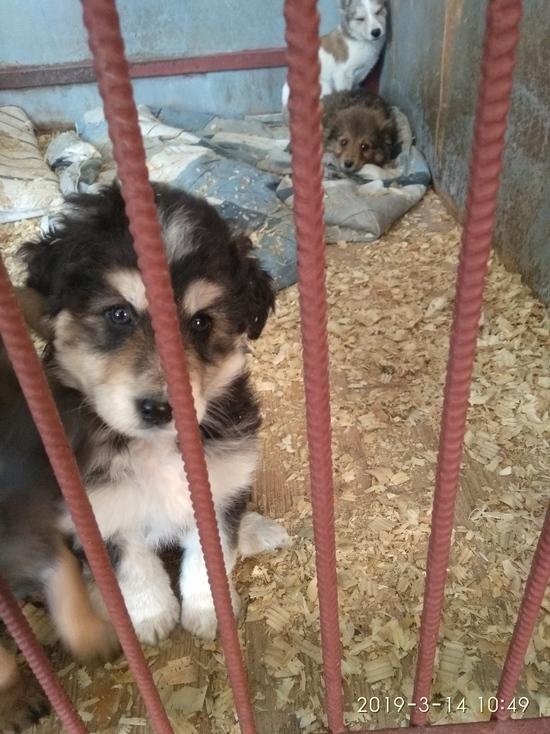 В Туле отловили 15 бездомных собак