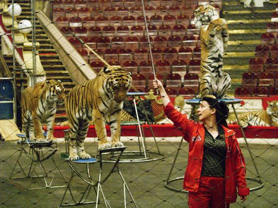 Цирковым кошкам рекомендовали устраивать разгрузочные дни
