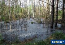 Директор новочебоксарского полигона ТБО отделался штрафом за 40-миллионный ущерб природе
