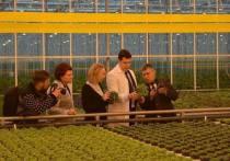 Глава Калининградской области и спикер Облдумы посадили салат в горшочках
