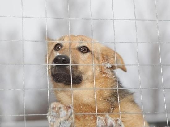 Приют для бездомных животных в Саранске ждёт гостей