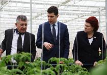 В Калининградской области введена вторая очередь тепличного комплекса для круглогодичного производства овощей