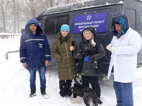 В Заволжском районе Ульяновска проведут бесплатную вакцинацию домашних животных от бешенства