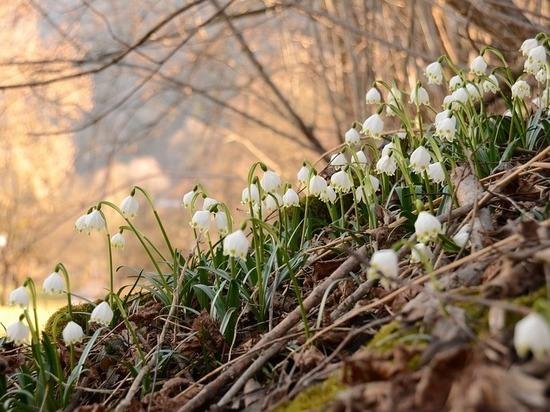 """""""Посиделки у бабушки Пелагеи"""": на Сороки день с ночью меряются, зима кончается, весна начинается"""