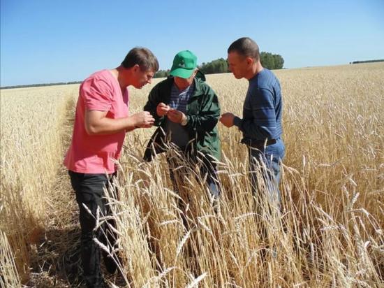 Семенной фонд Кемеровского НИИСХ обеспечит аграриям господдержку