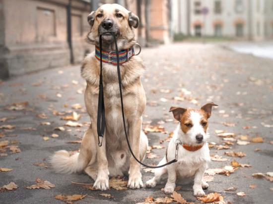 Кузбасские  эксперты усомнились в ответственном обращении с животными