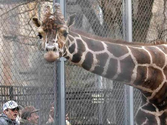В Минкультуры озаботились размерами вольеров в зоопарках