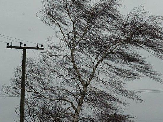 Спасатели предупредили красноярцев о штормовом ветре