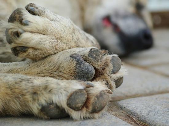 В садоводстве Первомайского района отравили собак