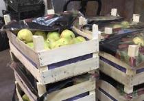 В Кирове уничтожили свыше тонны овощей, грибов и фруктов