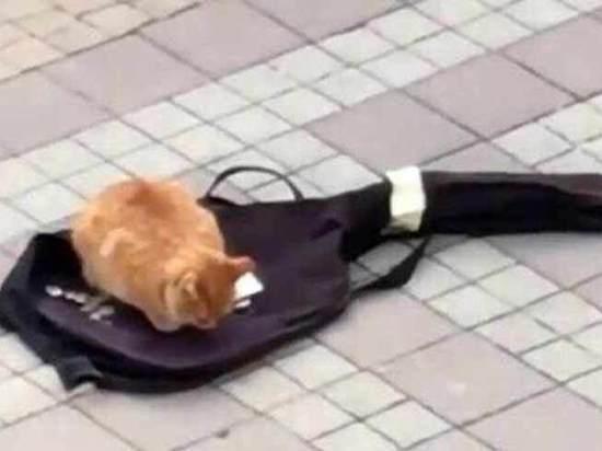 МВД Крыма заинтересовалось автоледи, задавившей кота уличного музыканта