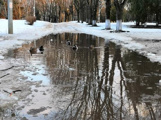 По дорожкам Парка Победы в Твери поплыли утки