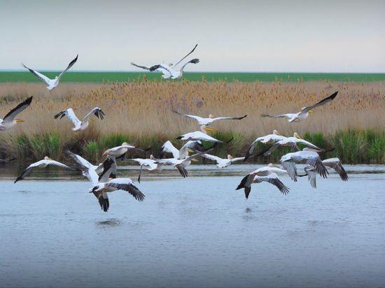 Калмыкия и Ставропольский край вместе защитят природу