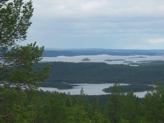 Мурманское отделение WWF России: с 1 июля страна начнет терять защитные леса и рыбные ресурсы