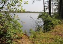Лес Вологодчины ждет заботы власти и общества