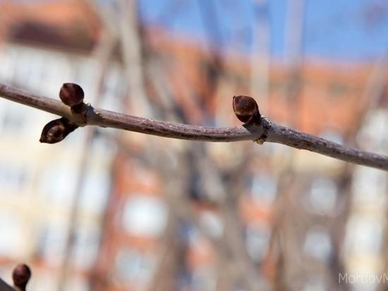 Паводок в Мордовии ждут в конце марта