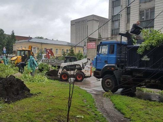 В 2019 году в Ульяновске спилят 1645 аварийных деревьев