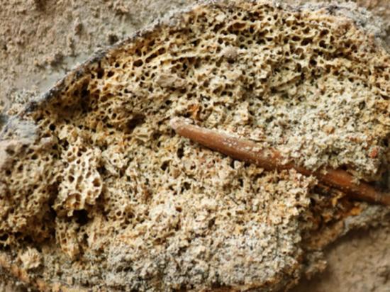 Под Воронежем нашли ребро мамонта, в котором застрял наконечник копья